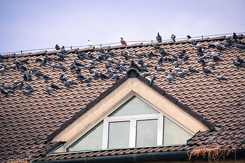 Pigeon standing on a brown tiled roof